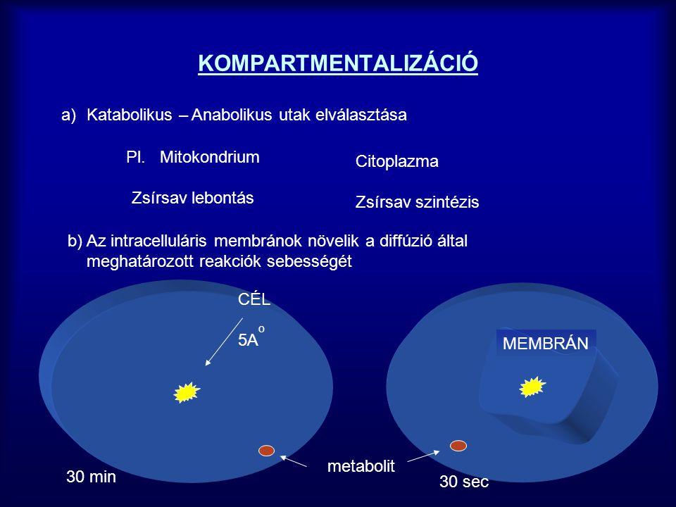 KOMPARTMENTALIZÁCIÓ Katabolikus – Anabolikus utak elválasztása