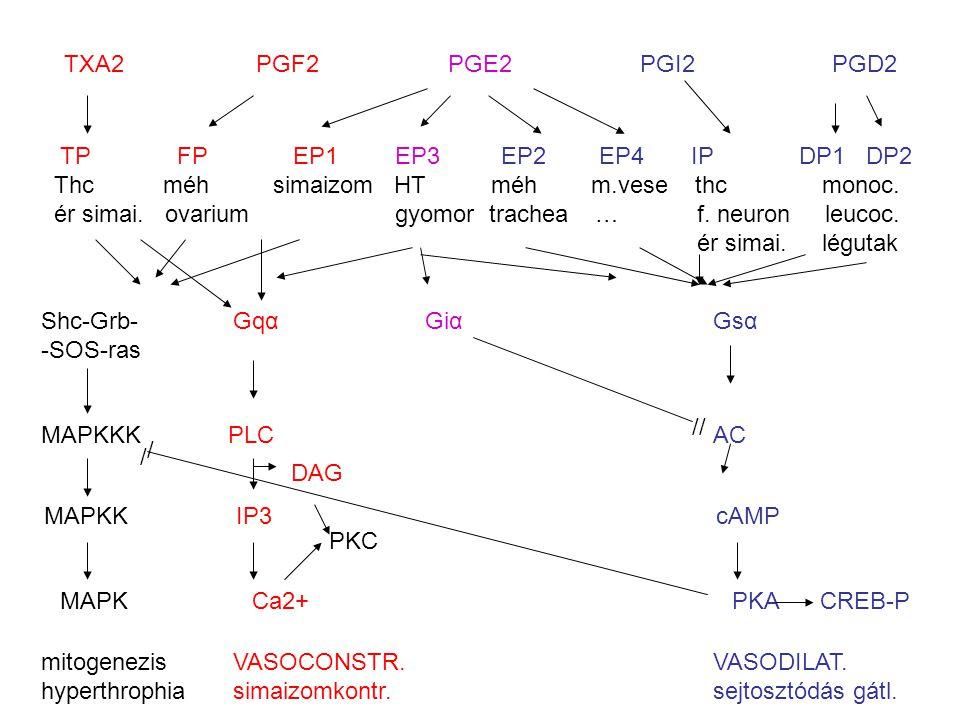 TXA2 PGF2 PGE2 PGI2 PGD2 TP FP EP1 EP3 EP2 EP4 IP DP1 DP2.