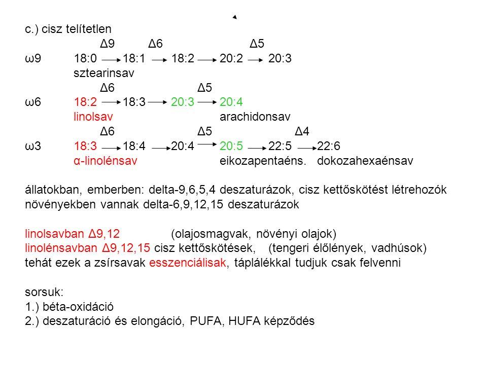 c.) cisz telítetlen Δ9 Δ6 Δ5. ω9 18:0 18:1 18:2 20:2 20:3. sztearinsav. Δ6 Δ5.