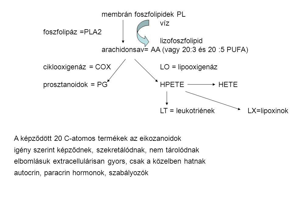 membrán foszfolipidek PL