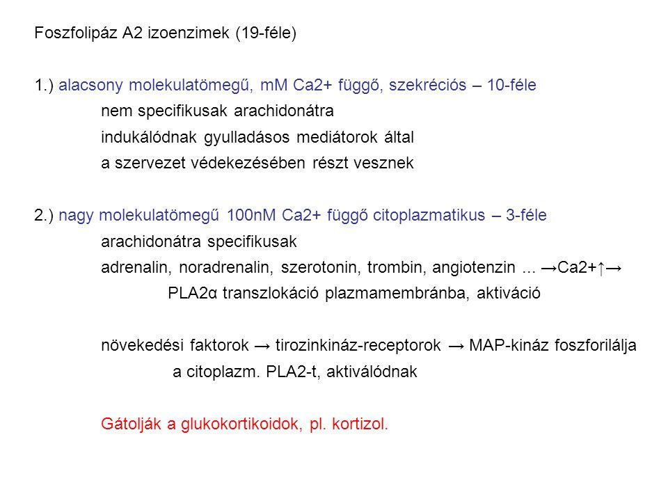 Foszfolipáz A2 izoenzimek (19-féle)