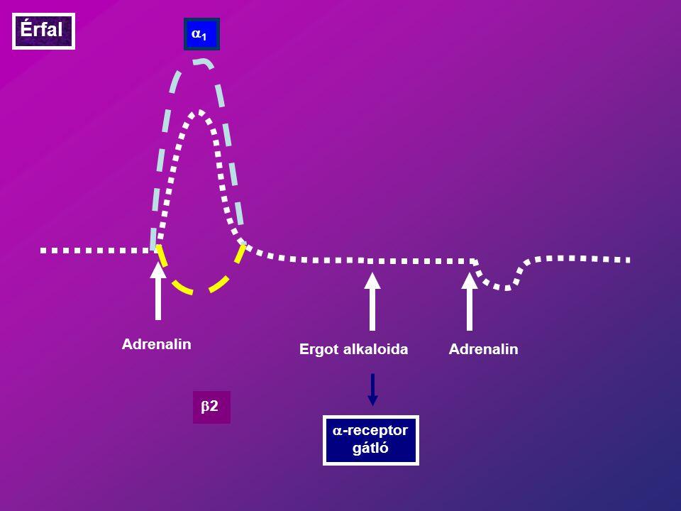 Érfal a1 Adrenalin Ergot alkaloida Adrenalin b2 a-receptor gátló