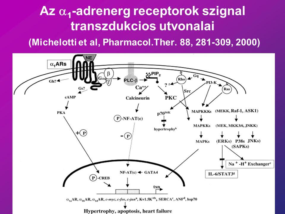 Az a1-adrenerg receptorok szignal transzdukcios utvonalai (Michelotti et al, Pharmacol.Ther.