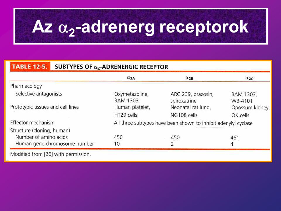 Az a2-adrenerg receptorok