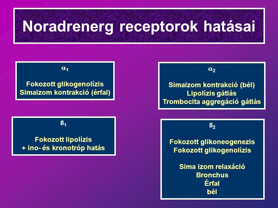 Noradrenerg receptorok hatásai