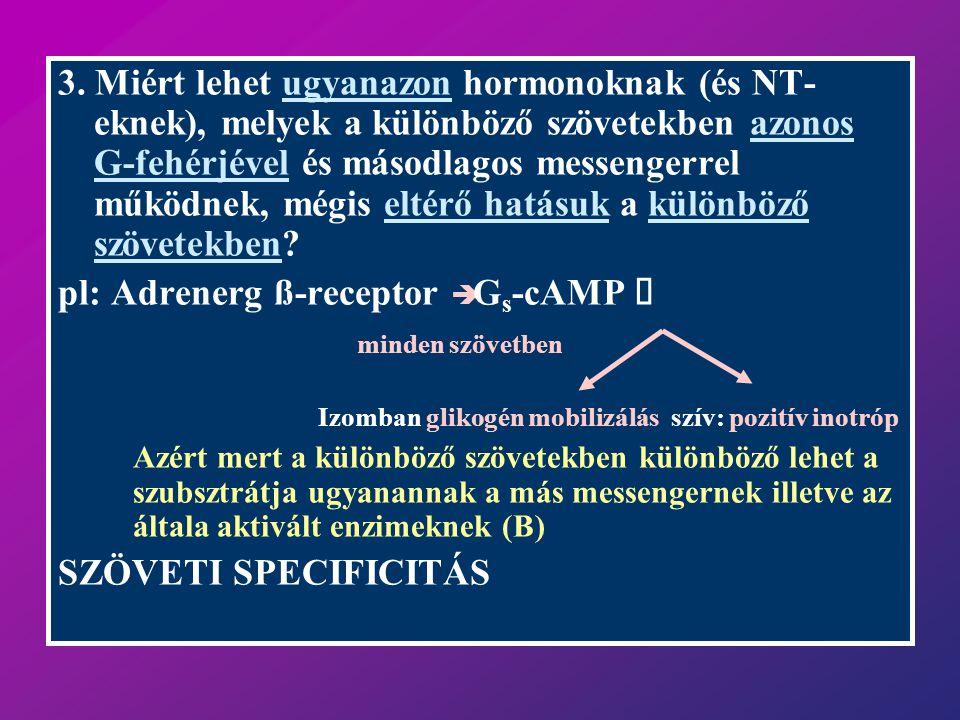 pl: Adrenerg ß-receptor è Gs-cAMP é minden szövetben