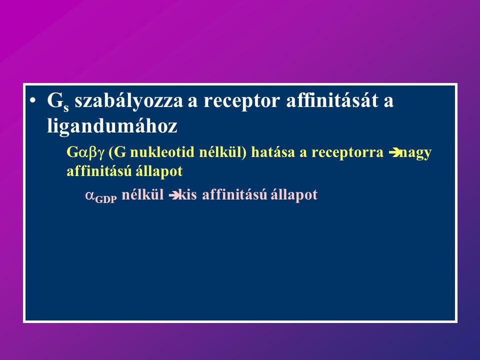 Gs szabályozza a receptor affinitását a ligandumához