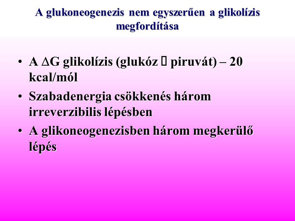 A glukoneogenezis nem egyszerűen a glikolízis megfordítása