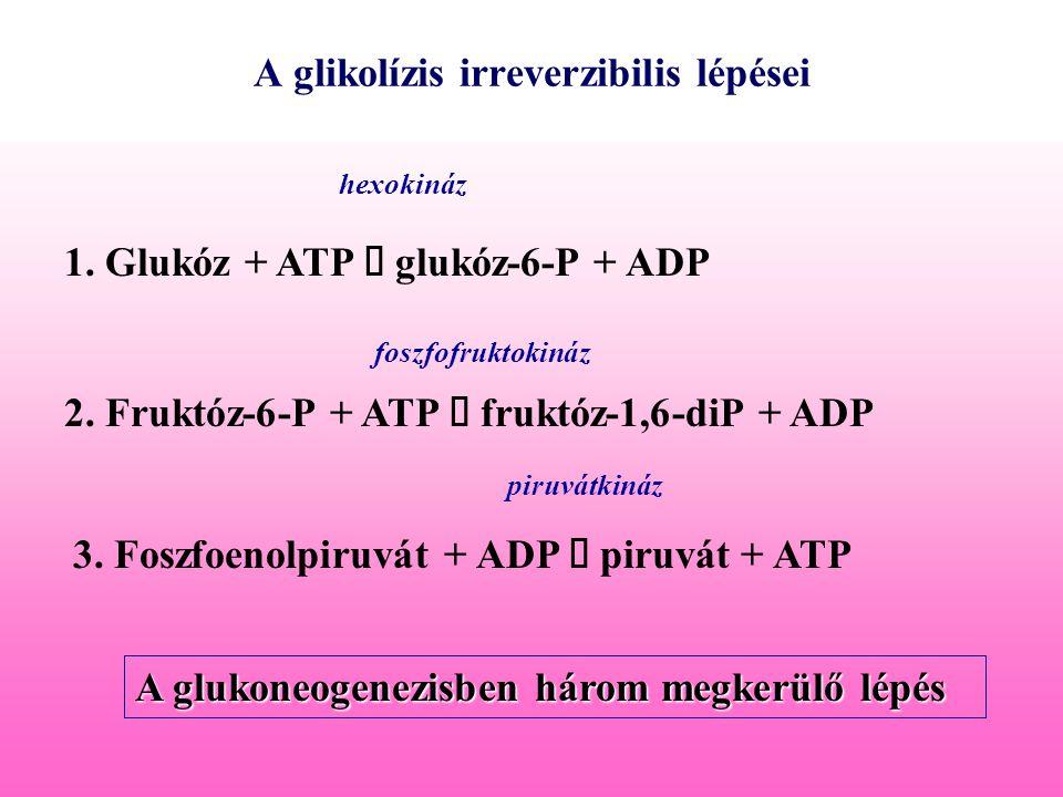 A glikolízis irreverzibilis lépései