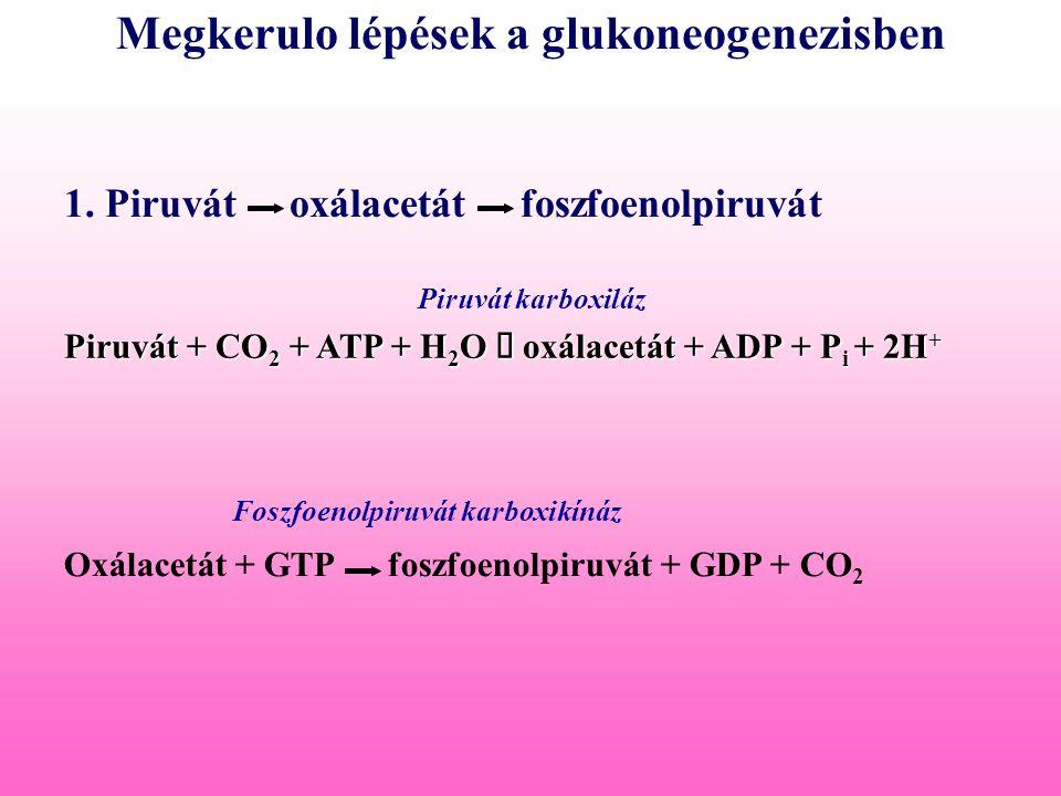 Megkerulo lépések a glukoneogenezisben
