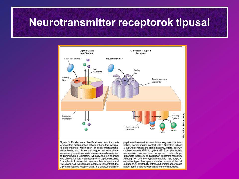 Neurotransmitter receptorok tipusai