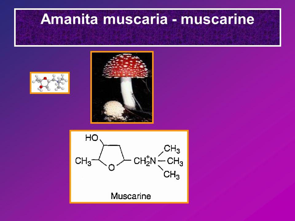 Amanita muscaria - muscarine