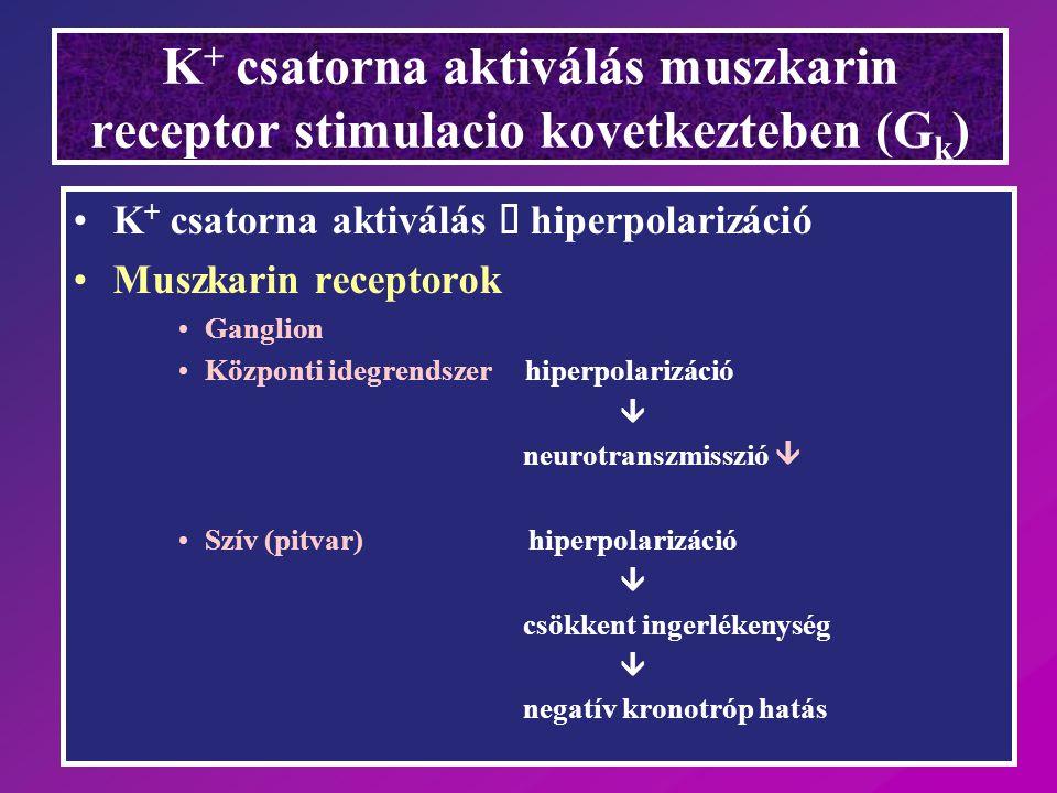K+ csatorna aktiválás muszkarin receptor stimulacio kovetkezteben (Gk)