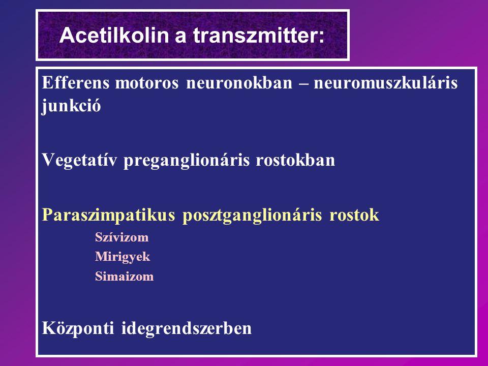 Acetilkolin a transzmitter: