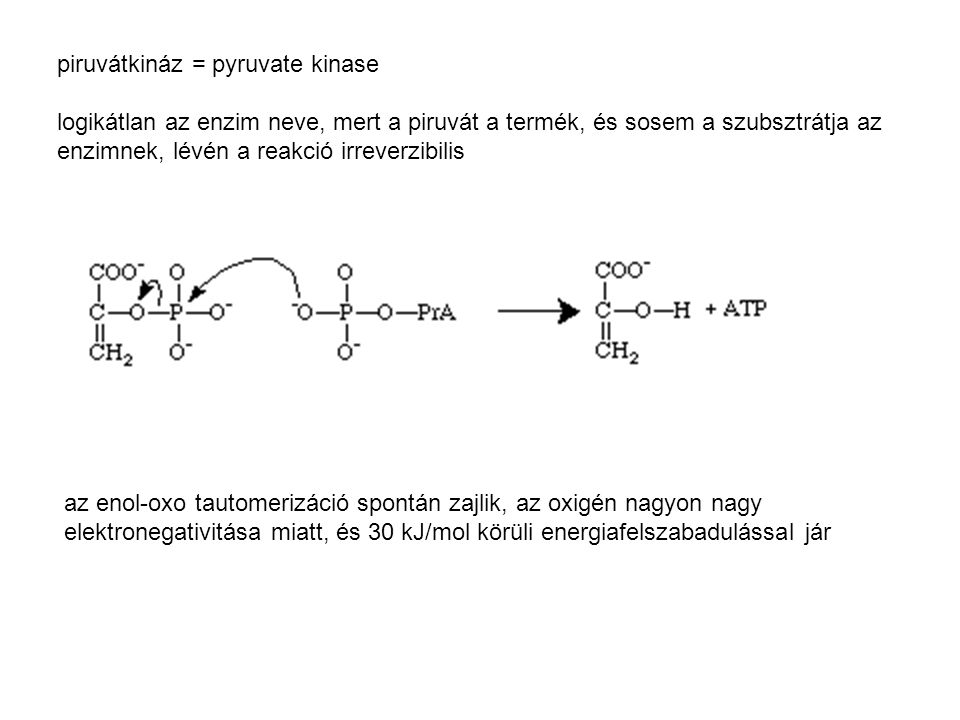 piruvátkináz = pyruvate kinase