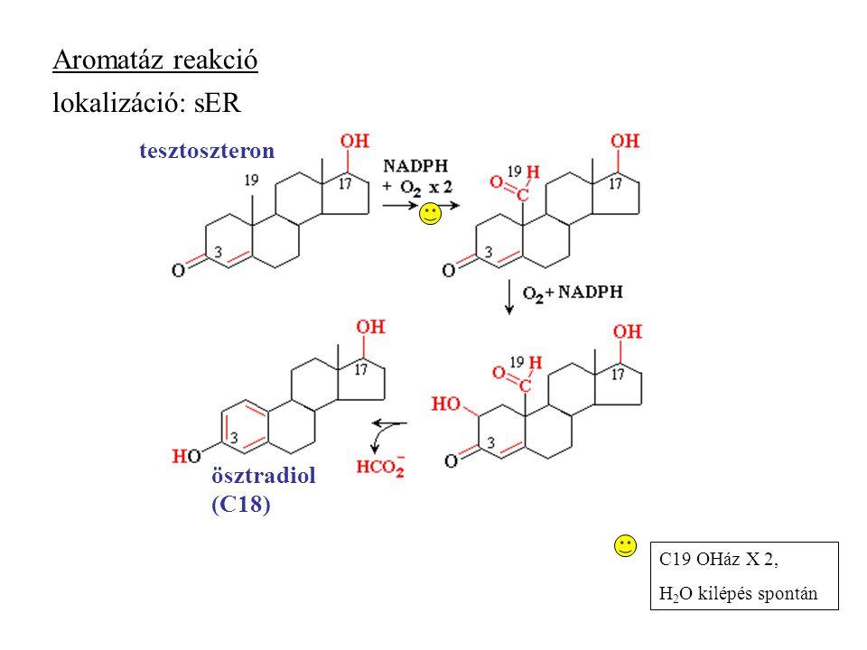 Aromatáz reakció lokalizáció: sER tesztoszteron ösztradiol (C18)