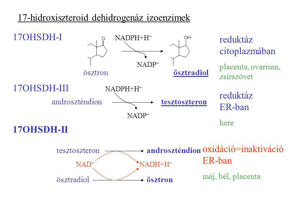 17-hidroxiszteroid dehidrogenáz izoenzimek