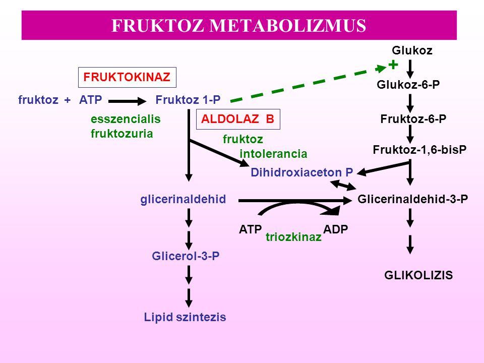 FRUKTOZ METABOLIZMUS + Glukoz FRUKTOKINAZ Glukoz-6-P fruktoz + ATP
