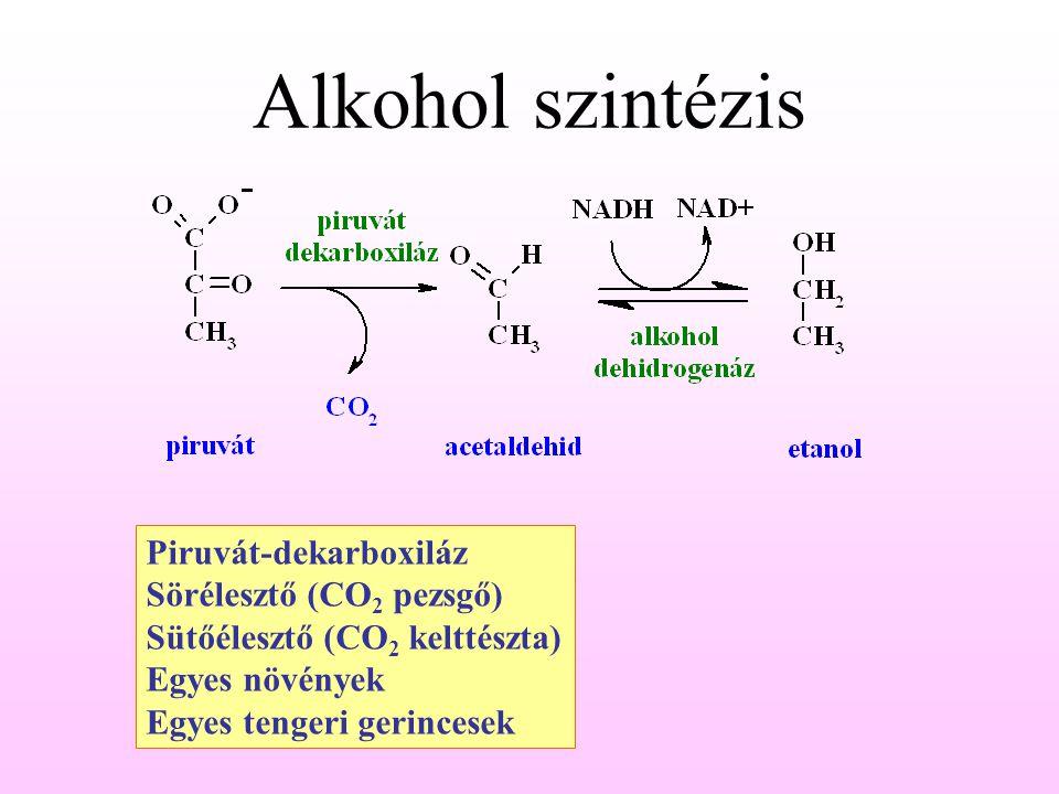 Alkohol szintézis Piruvát-dekarboxiláz Sörélesztő (CO2 pezsgő)