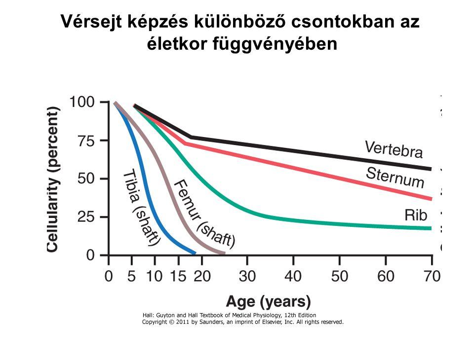 Vérsejt képzés különböző csontokban az