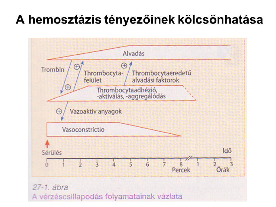 A hemosztázis tényezőinek kölcsönhatása