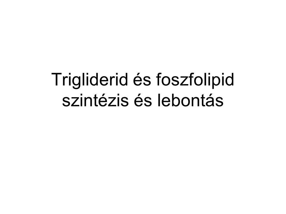 Trigliderid és foszfolipid szintézis és lebontás