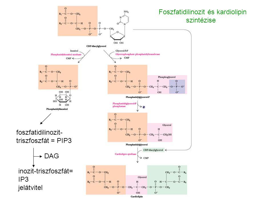 Foszfatidilinozit és kardiolipin