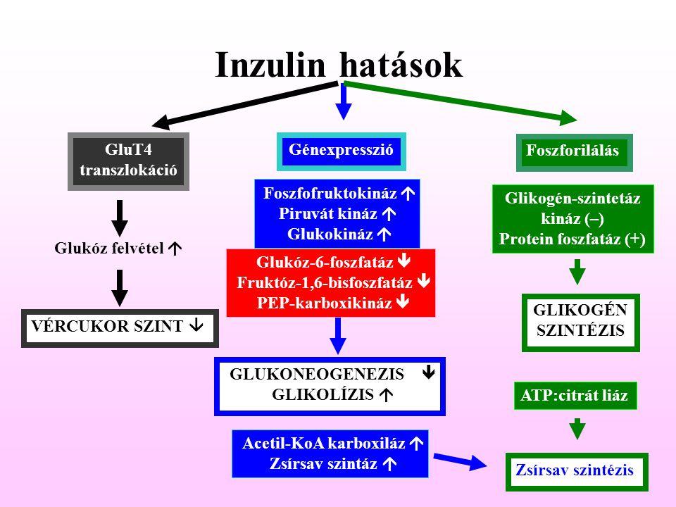 Acetil-KoA karboxiláz á
