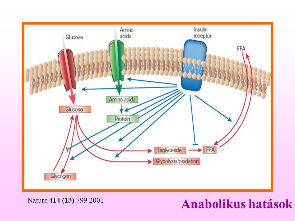 Nature 414 (13) 799 2001 Anabolikus hatások