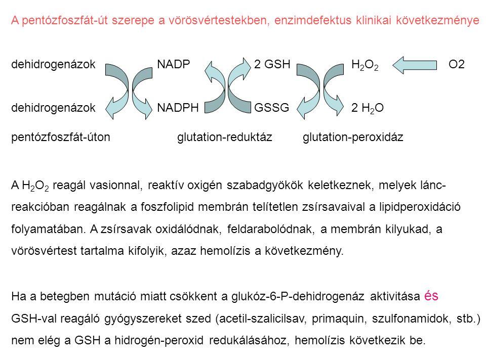 A pentózfoszfát-út szerepe a vörösvértestekben, enzimdefektus klinikai következménye