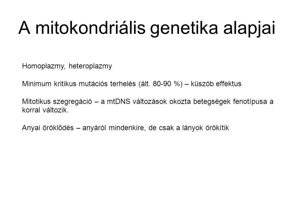 A mitokondriális genetika alapjai