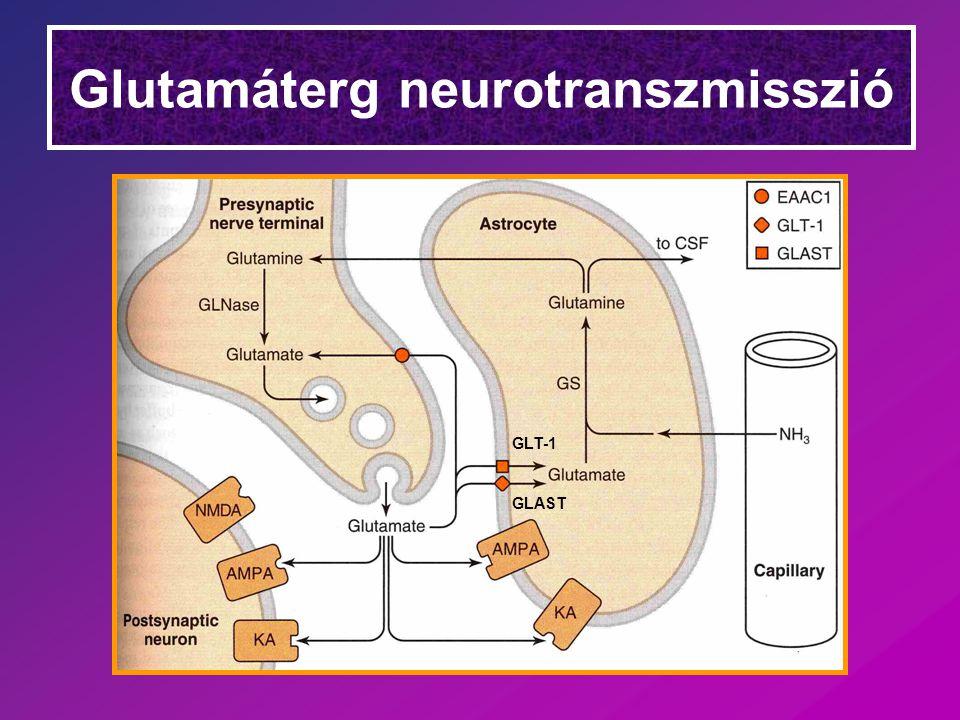 Glutamáterg neurotranszmisszió