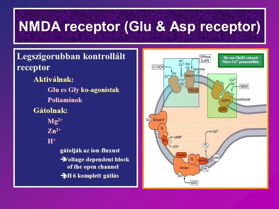 NMDA receptor (Glu & Asp receptor)