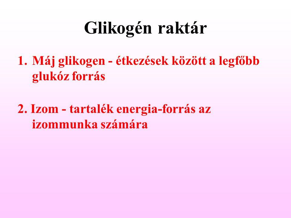Glikogén raktár Máj glikogen - étkezések között a legfőbb glukóz forrás.