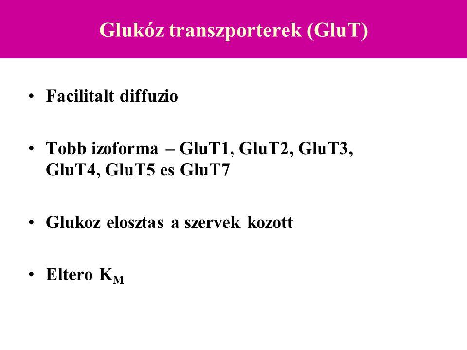 Glukóz transzporterek (GluT)