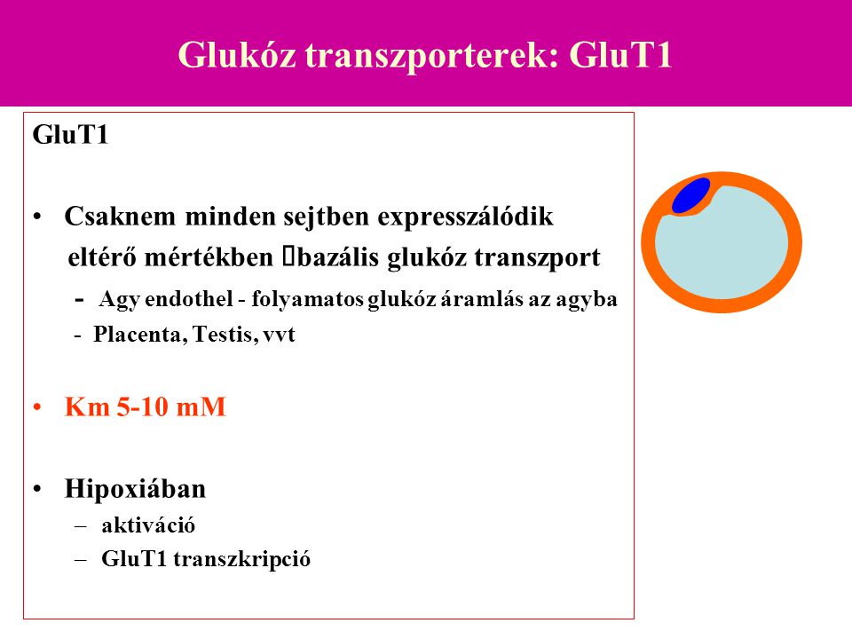 Glukóz transzporterek: GluT1