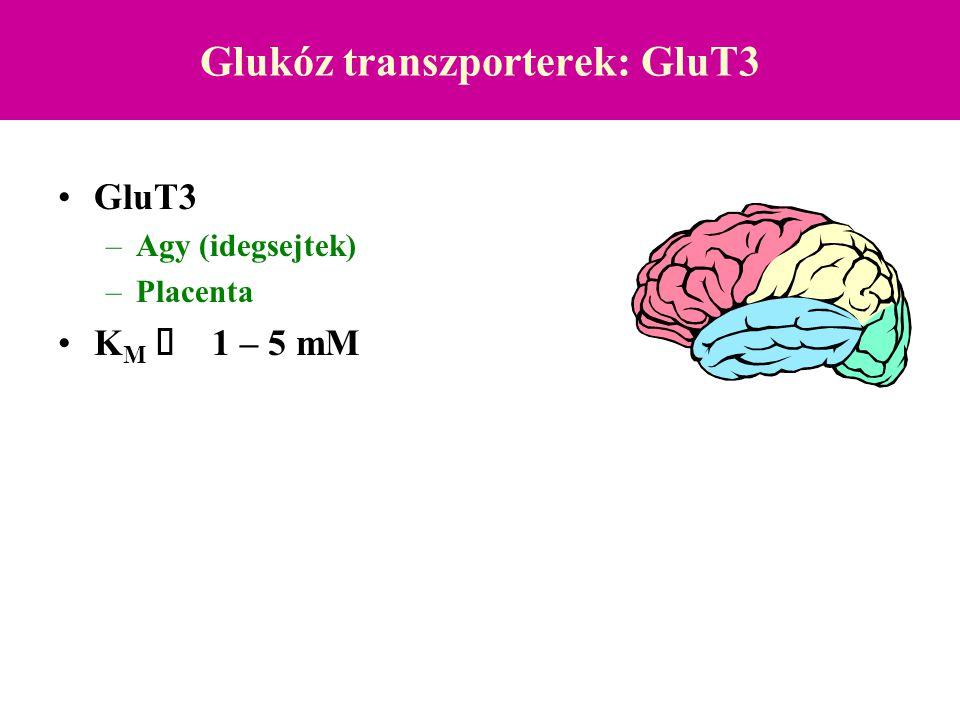 Glukóz transzporterek: GluT3