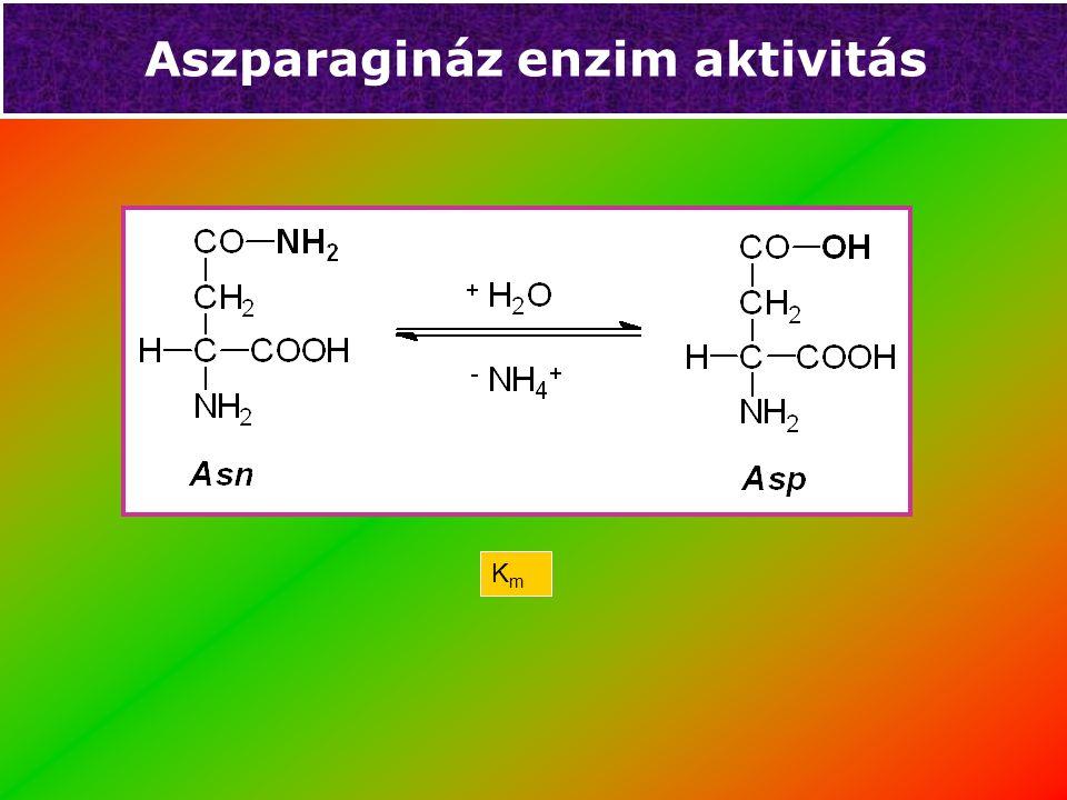 Aszparagináz enzim aktivitás