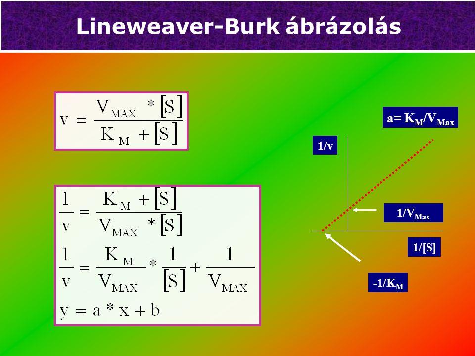 Lineweaver-Burk ábrázolás