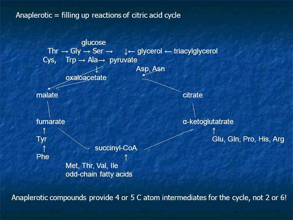 Anaplerotic = filling up reactions of citric acid cycle