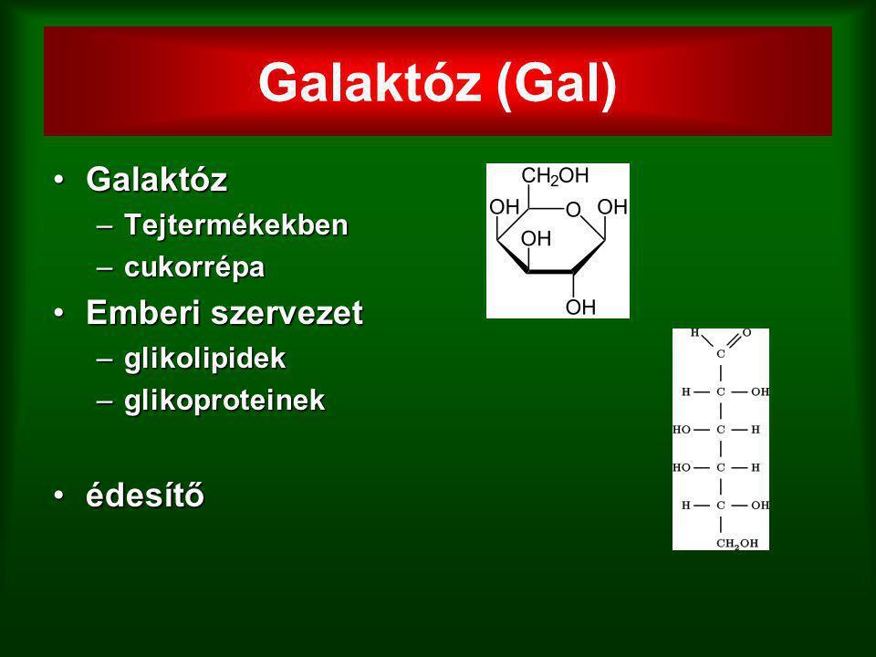Galaktóz (Gal) Galaktóz Emberi szervezet édesítő Tejtermékekben