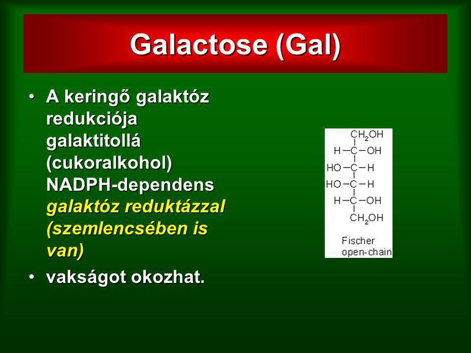 Galactose (Gal) A keringő galaktóz redukciója galaktitollá (cukoralkohol) NADPH-dependens galaktóz reduktázzal (szemlencsében is van)