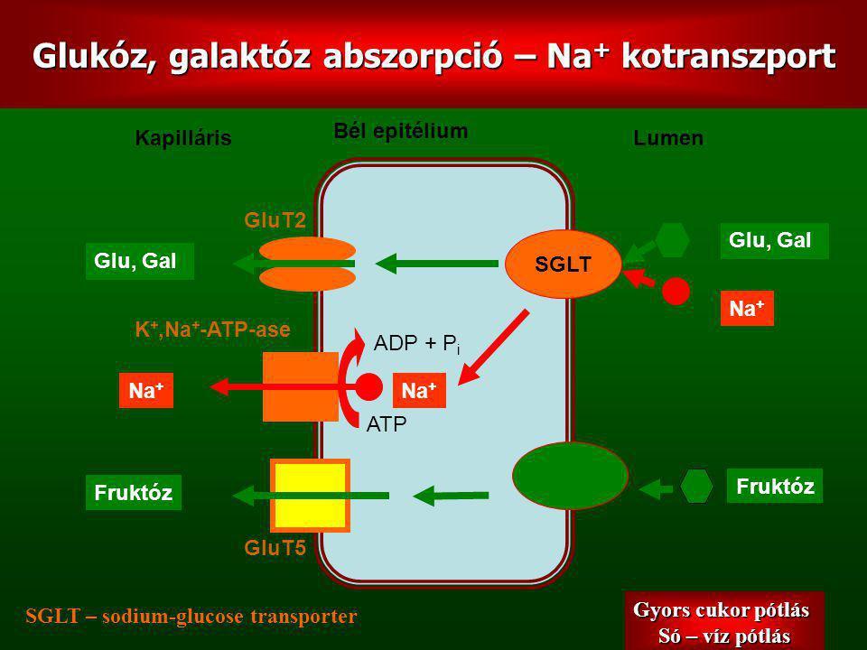 Glukóz, galaktóz abszorpció – Na+ kotranszport