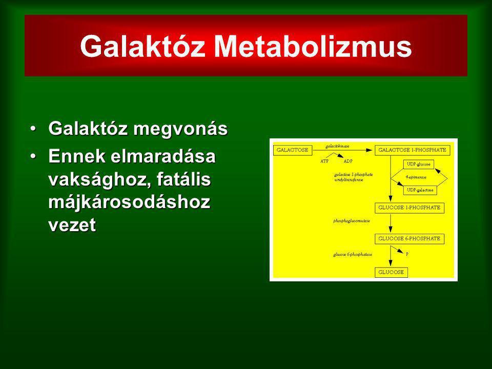 Galaktóz Metabolizmus