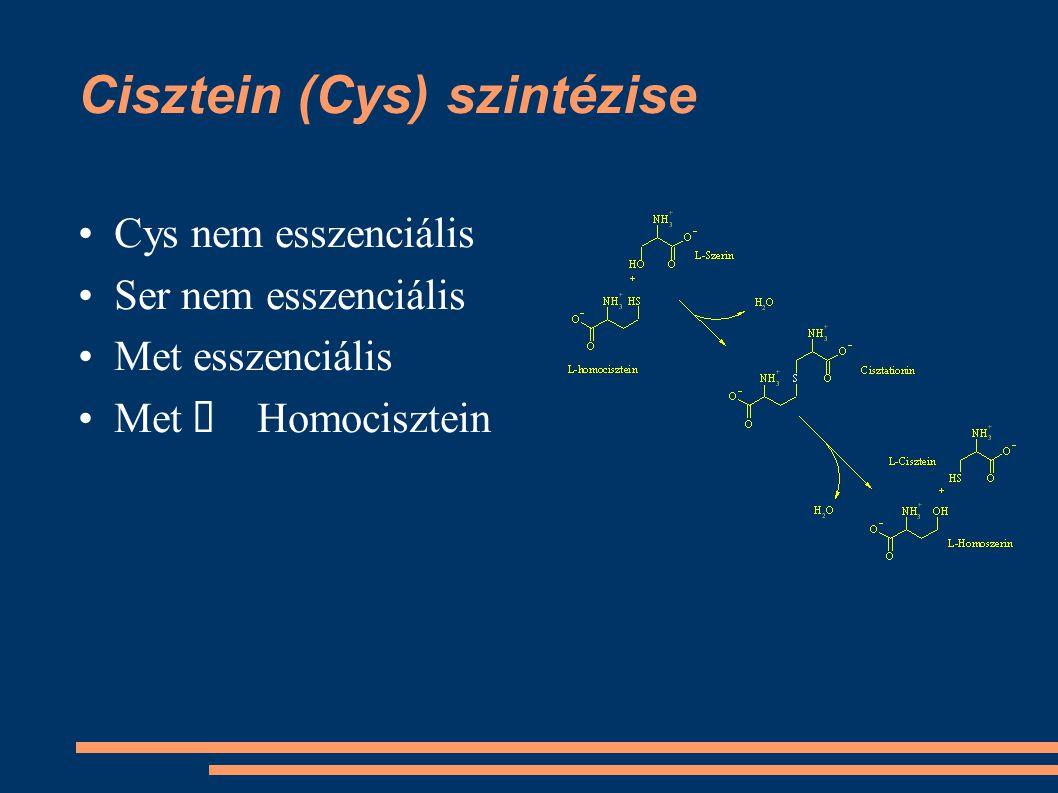 Cisztein (Cys) szintézise