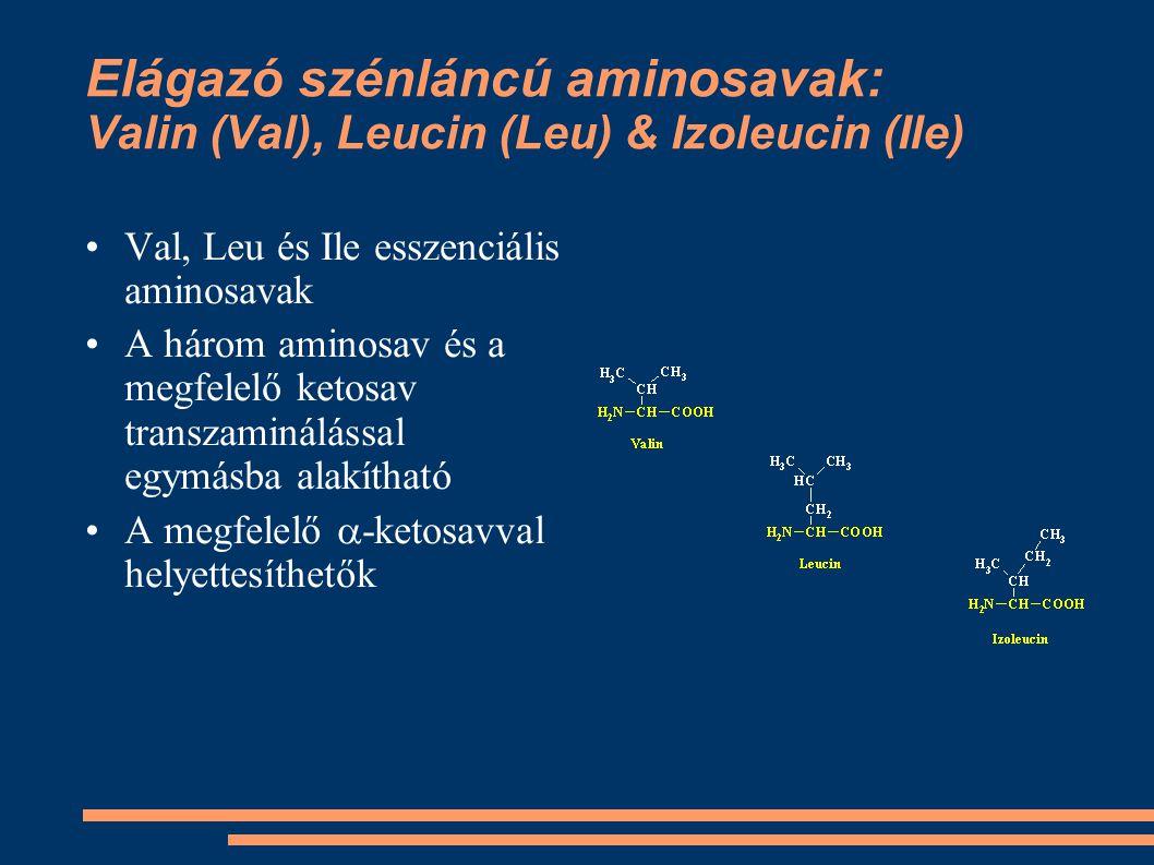 Elágazó szénláncú aminosavak: Valin (Val), Leucin (Leu) & Izoleucin (Ile)