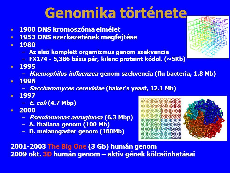 Genomika története 1900 DNS kromoszóma elmélet