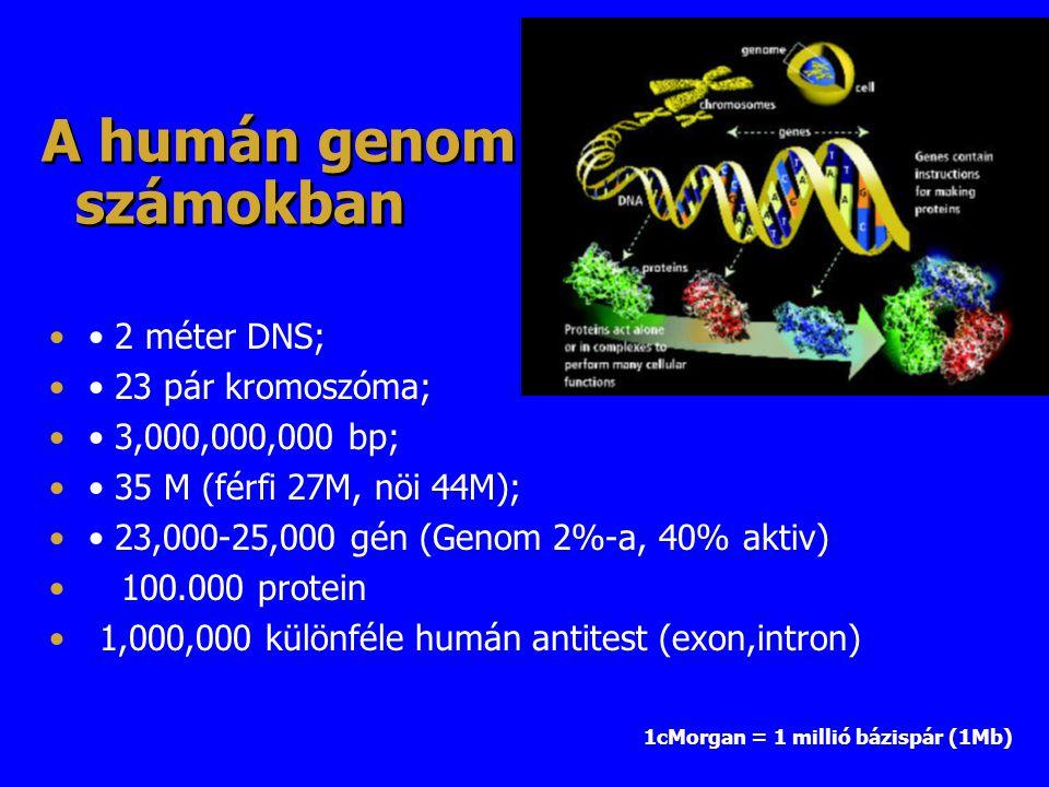 A humán genom számokban