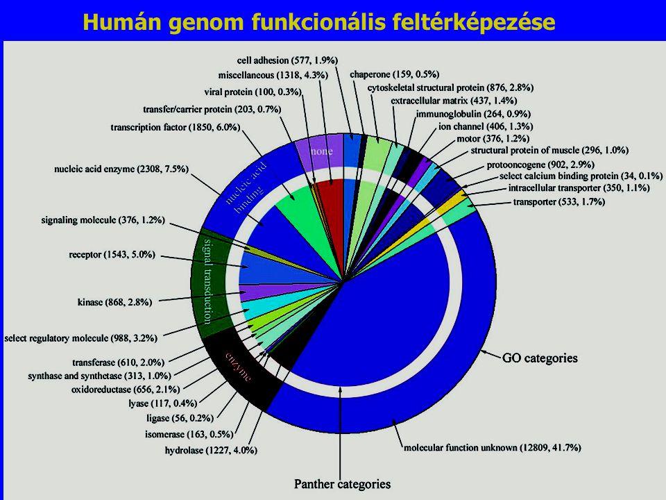 Gene Functions Humán genom funkcionális feltérképezése