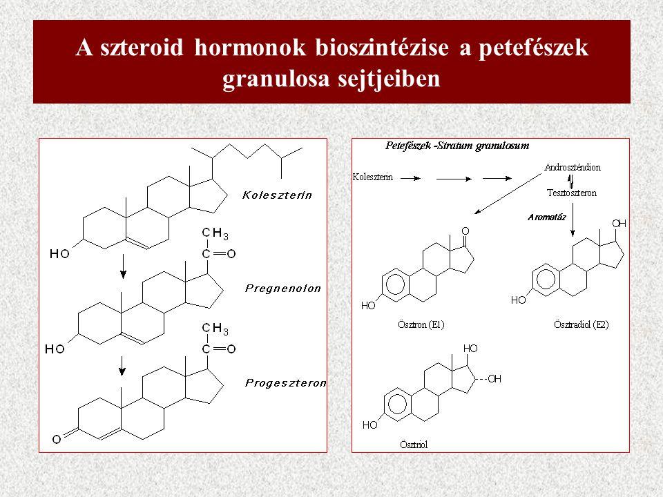 A szteroid hormonok bioszintézise a petefészek granulosa sejtjeiben
